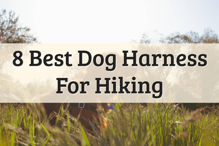 best dog harnesses brands - feature image