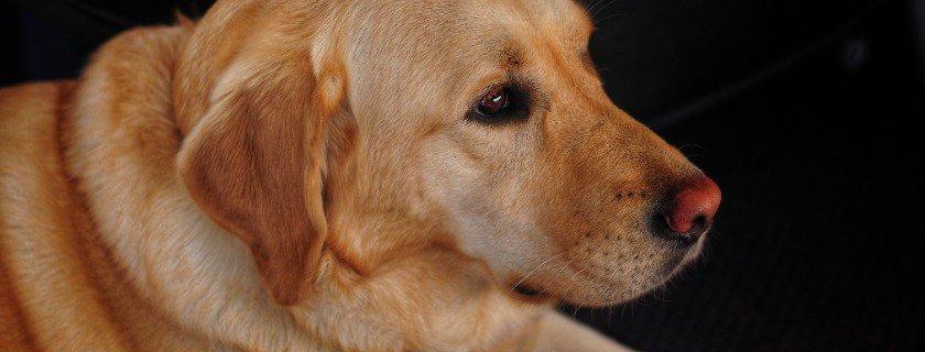 dog food brands with glucosamine, protein, 6 fatty acids