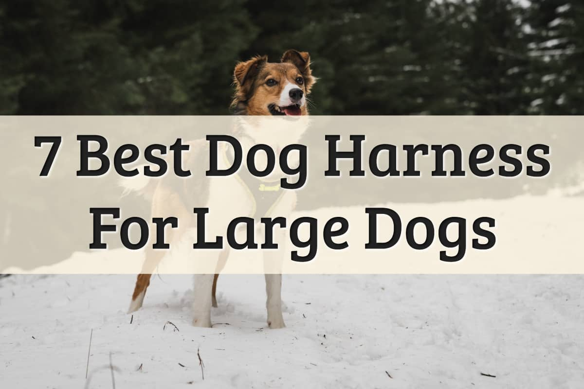 best harness for big dogs review - feature image