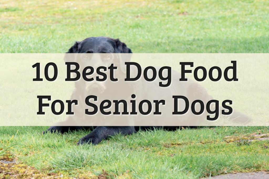 senior dog food review - feature image