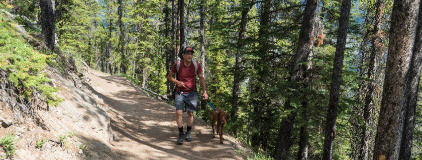 hiking with dog tips and how to pack a backpack