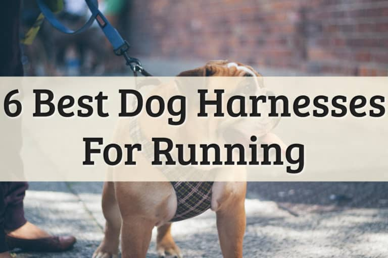Best Dog Running Harness Feature Image
