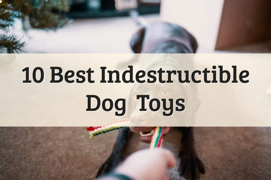 Chewie Toys for Dogs Featured Image