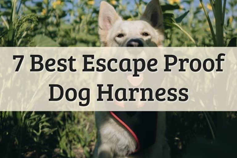 Best No Escape Dog Harness Feature Image
