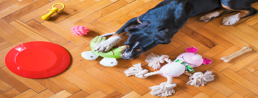 Dog Toys with Strong Look