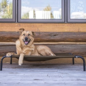 Chew-Proof Dog Bed for Outdoor Use