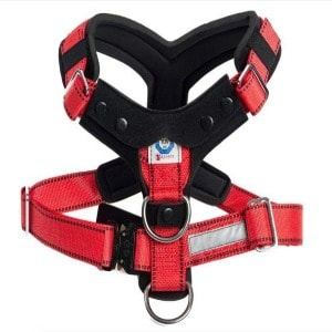The Perfect Running Harness for Dog