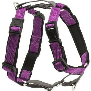 Safe Harnesses for Your Dog with Chest and Belly Straps