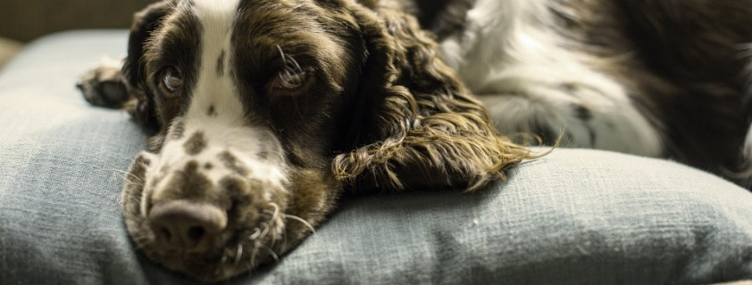 Fabrics Used in Dog Beds for Chewers