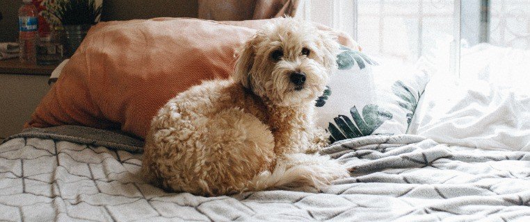Dog Wetting Bed Causes and