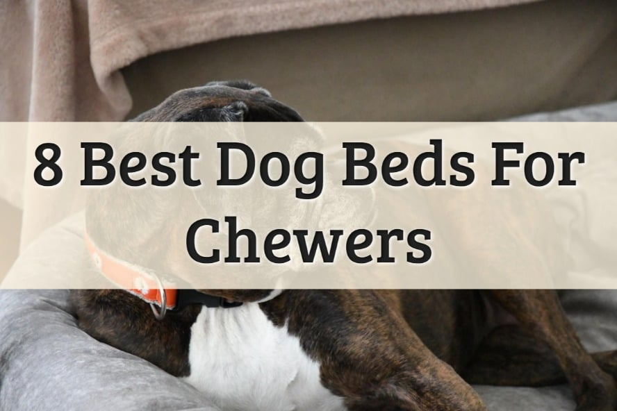 Best Chew-Proof Dog Beds Feature Image