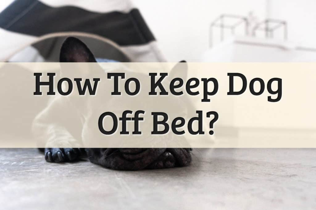 keeping dogs off the bed room - feature image