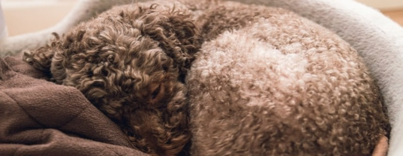 All You Need to Know About Dog Beds Washable