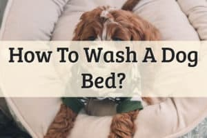 How To Wash Dog Bed Feature Image