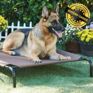 A Good Elevated Dog Bed for Large Dogs