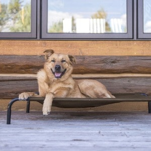 Elevated Dogs Bed Pet Parents Will Love