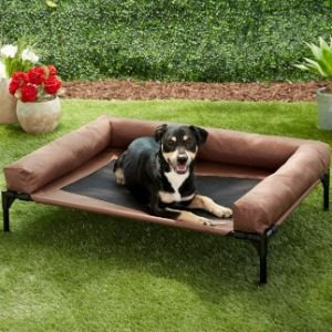 Elevated Dogs beds Best Options