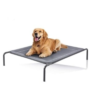 Dog Beds Best Ones That Are Elevated