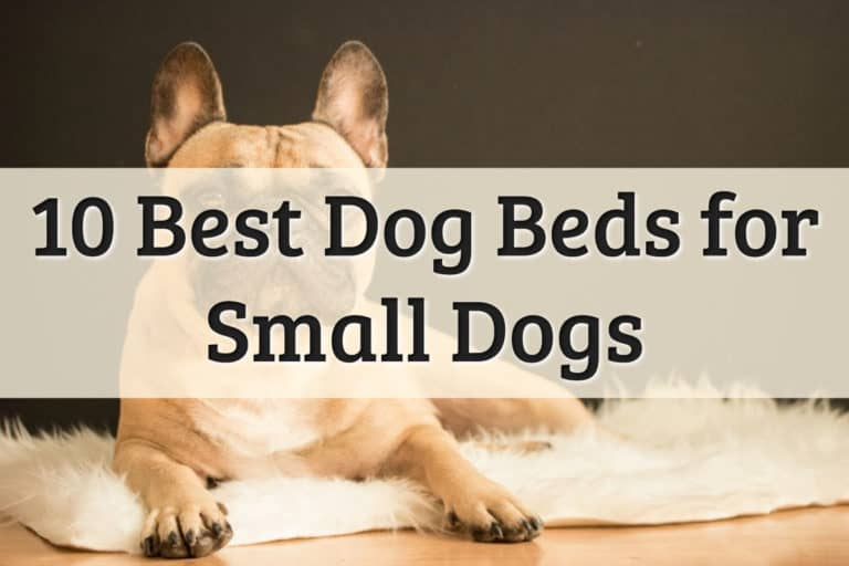 Best Dog Bed for Small Dog Feature Image