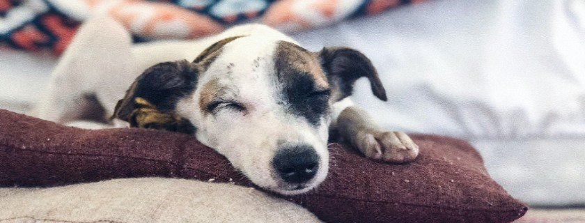 Help Joint Pain in Dogs with Orthopedic Beds