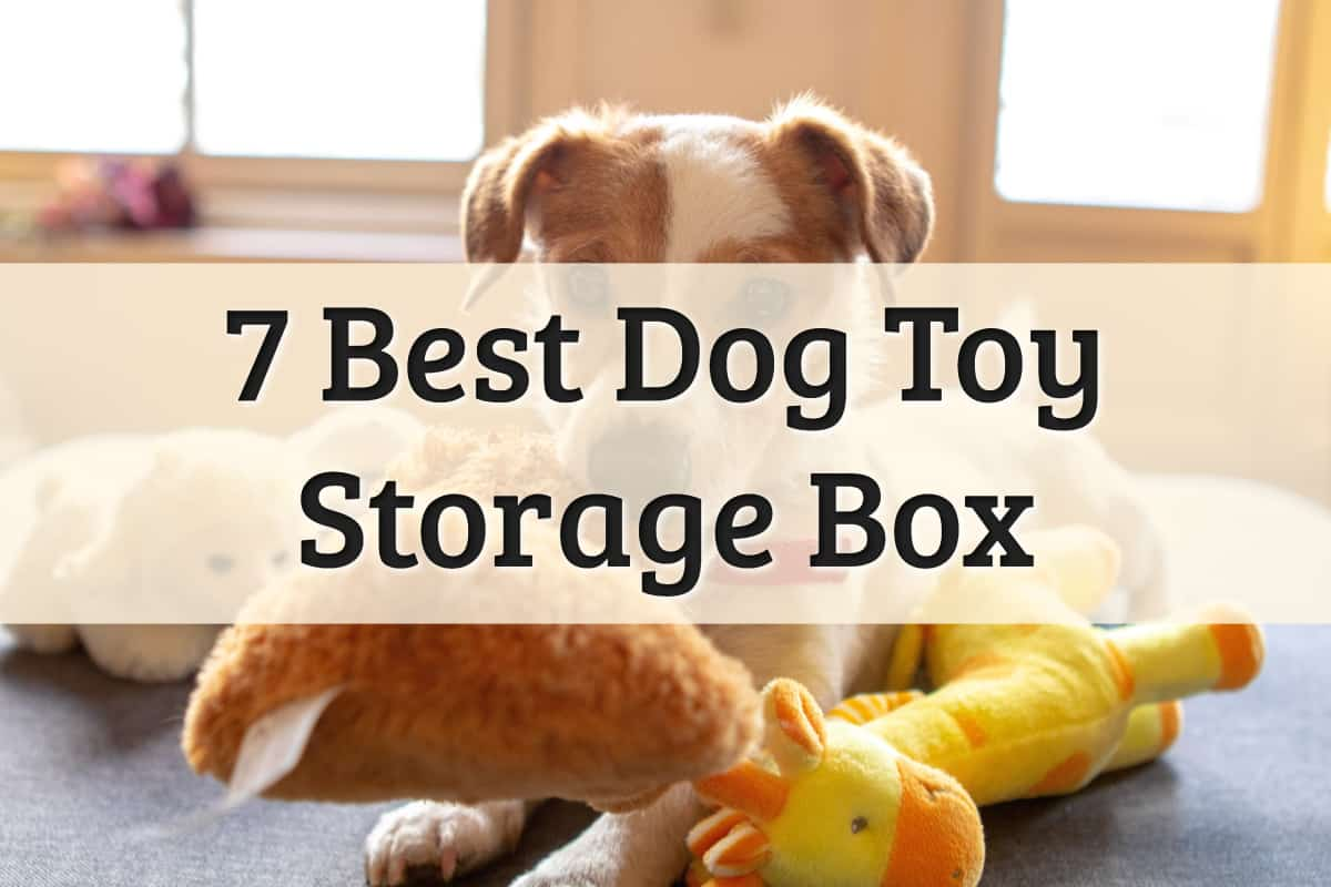 Best Dog Toy Box Feature Image