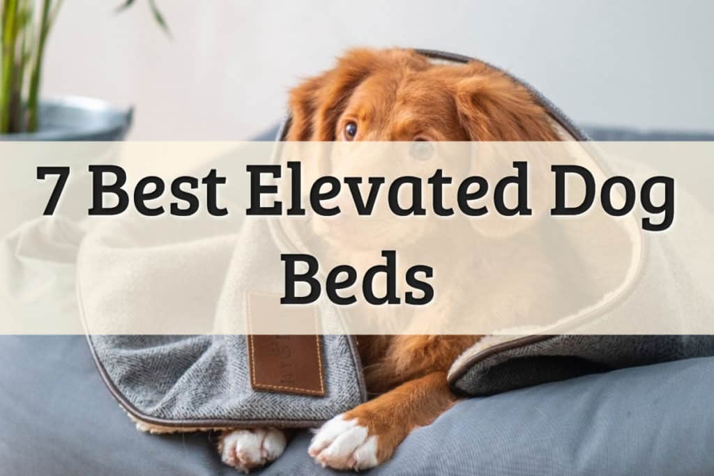 Best Elevated Beds For Dogs Feature Image