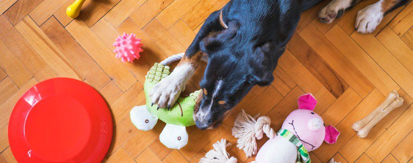 People Search for Dog Toy Storage Reviews