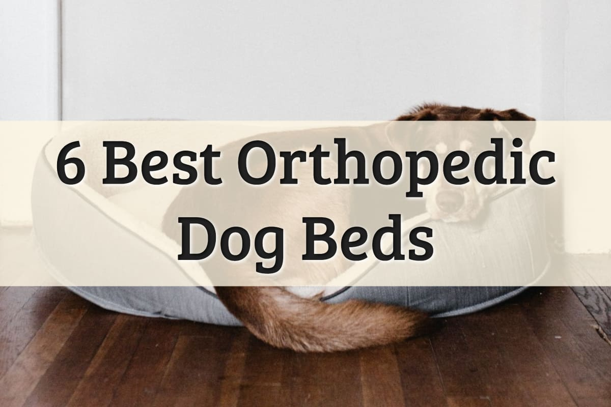 Best Orthopedic Dog Bed Reviews Feature Image