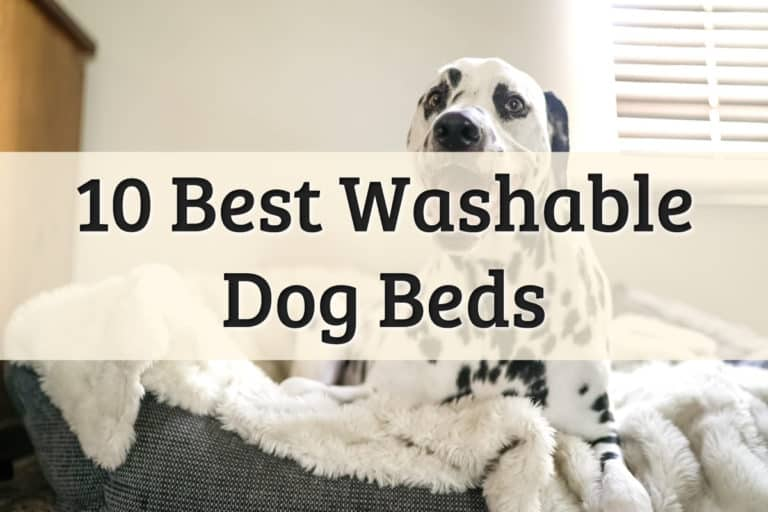 Best Washable Dog Bed Feature Image