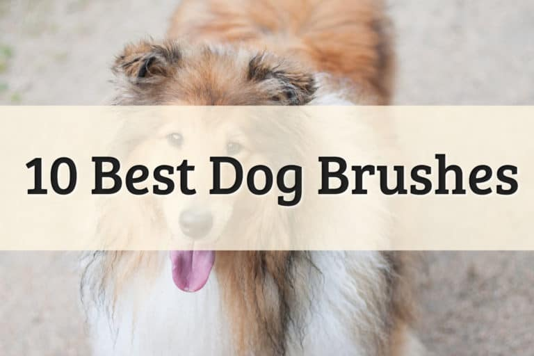 Best Dog Grooming Brush Feature Image