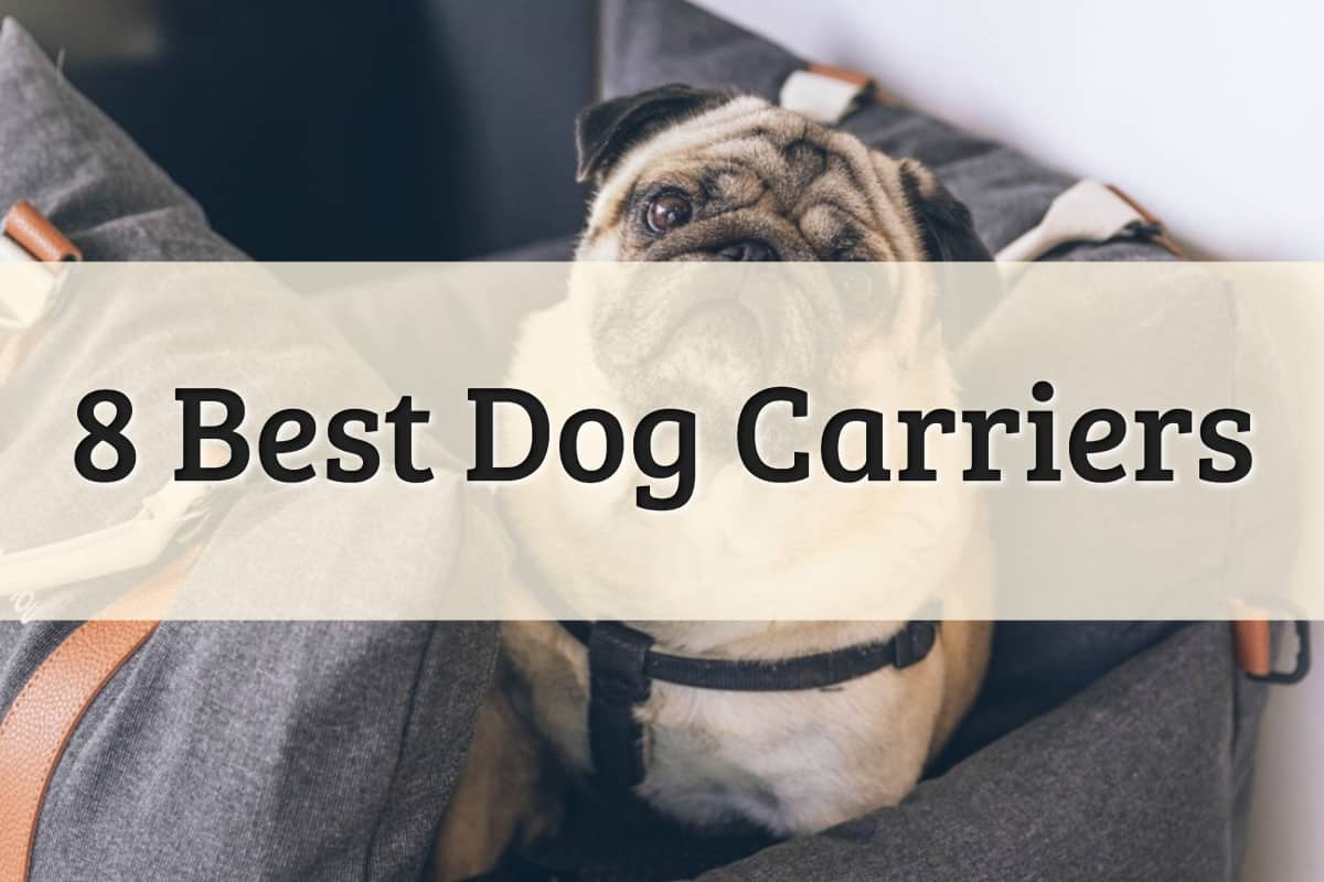 The Best Dog Carrier Feature Image