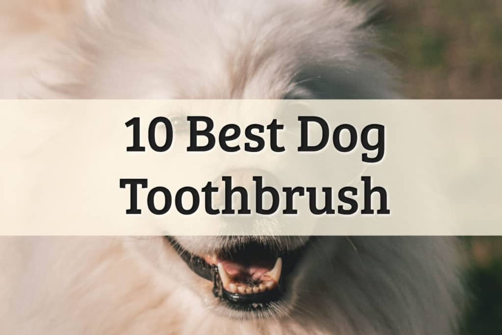 The Best Dog Toothbrush Feature Image
