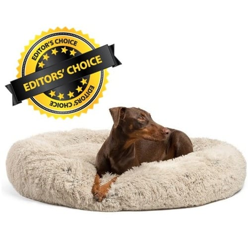 Orthopedic Foam Dog Bed Large Breed of Dogs