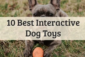 Interactive Toy For Dogs Feature Image