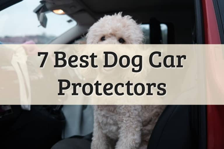 Best Dog Car Protector Feature Image