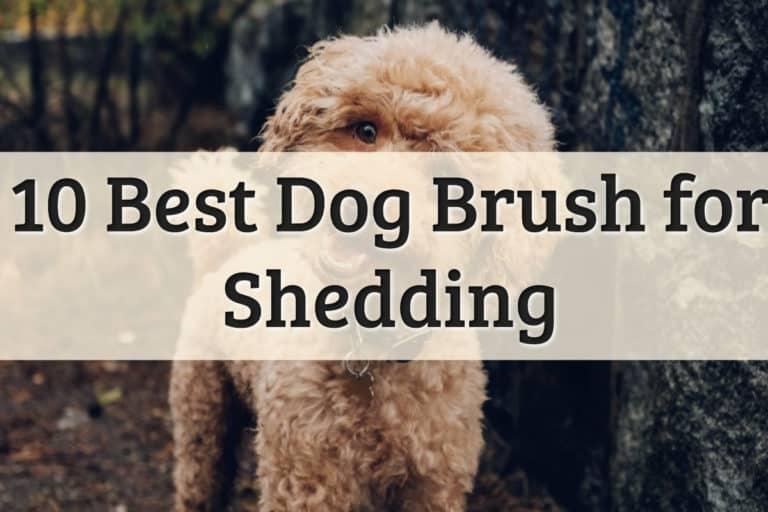 The Best DeShedding Dog Brush Feature Image