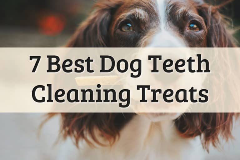 Best Dog Teeth Cleaning Treats Feature Image