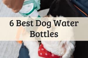 Best Dog Water Bottle Feature Image