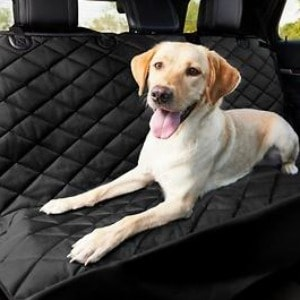 Protect Your Car's Leather Seats