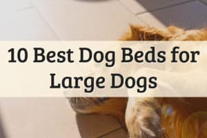 The Best Dog Beds for Large Dogs Feature Image