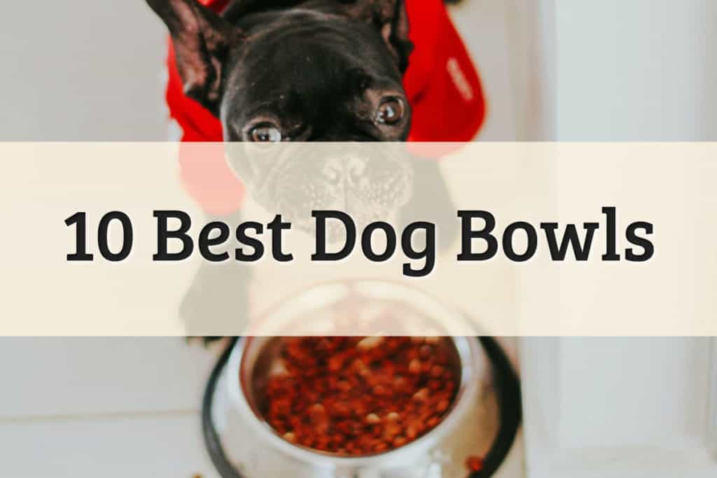 The Best Dog Bowls Feature Image