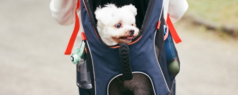 Bring Fido to the Mall in a Carrier