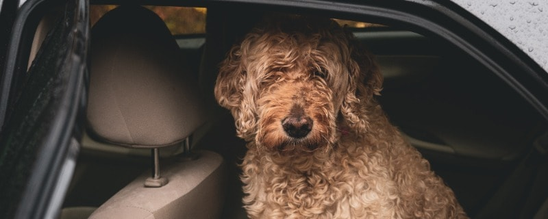 Keep Your Dog and Car Interior Safe