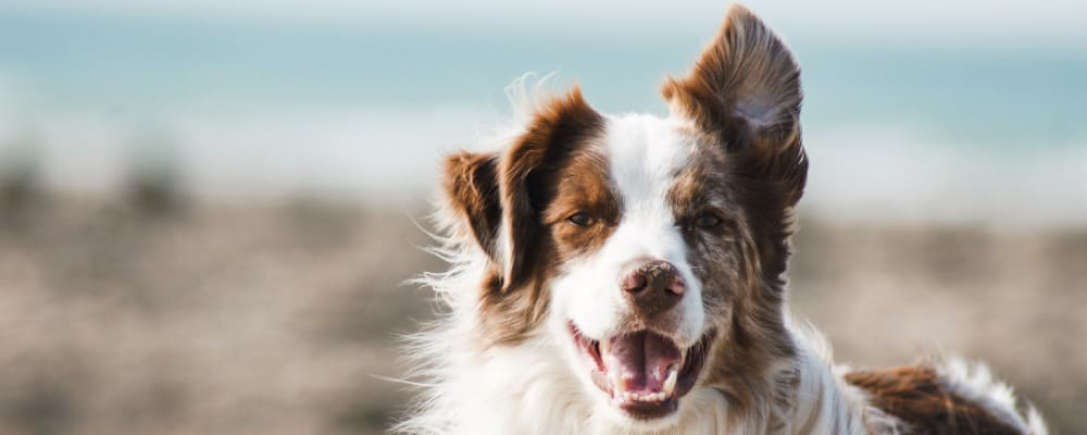 To Avoid Bad Breath, Brush Your Dog s Mouth