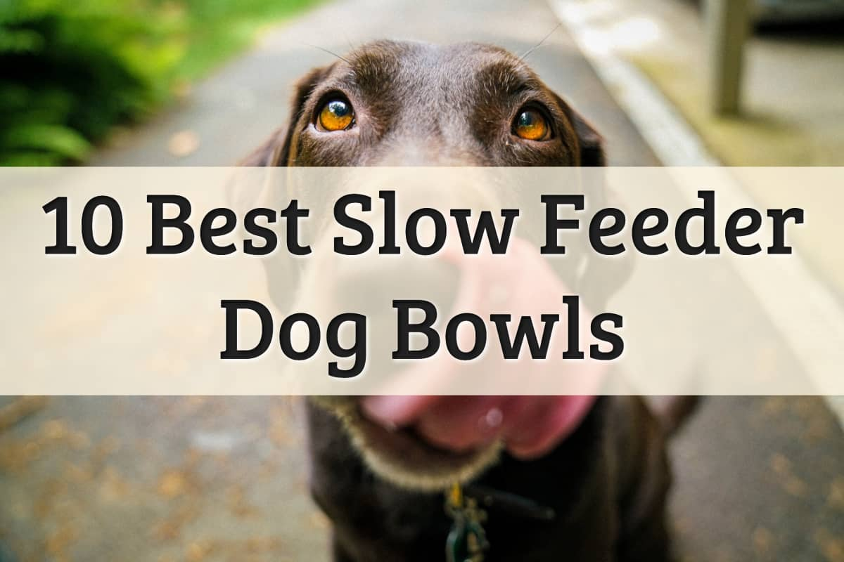 The Best Dog Slow Feeders Feature Image