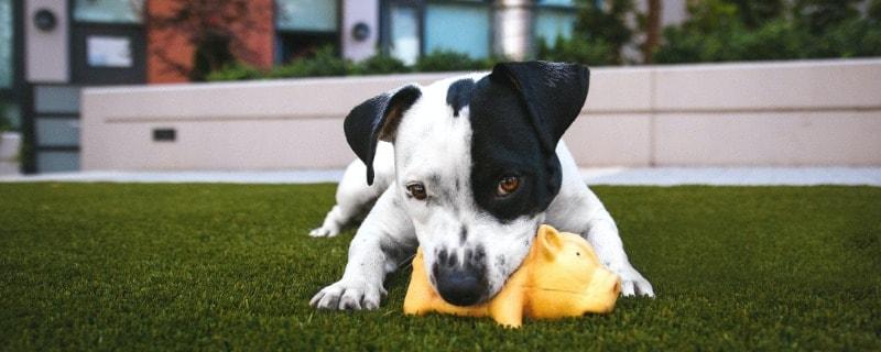 Dog Puzzle and Plush Toys