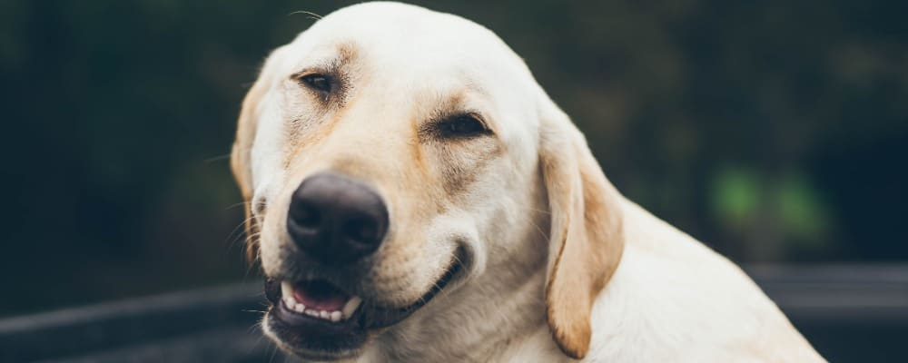 The Best Way To Clean Your Dog s Mouth