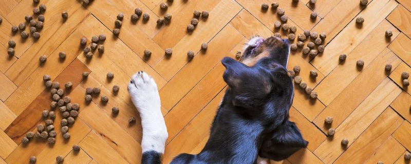 Large Dogs Would Benefit More from Using Elevated Bowls