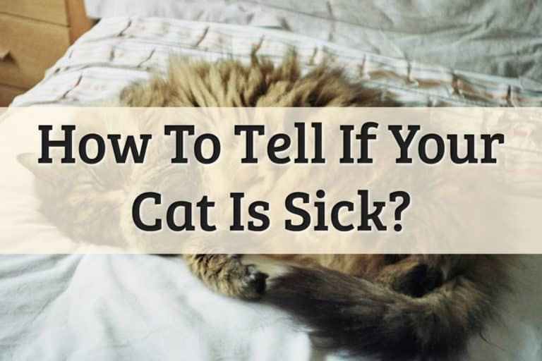 How To Tell If Your Cat Is Sick Feature Image