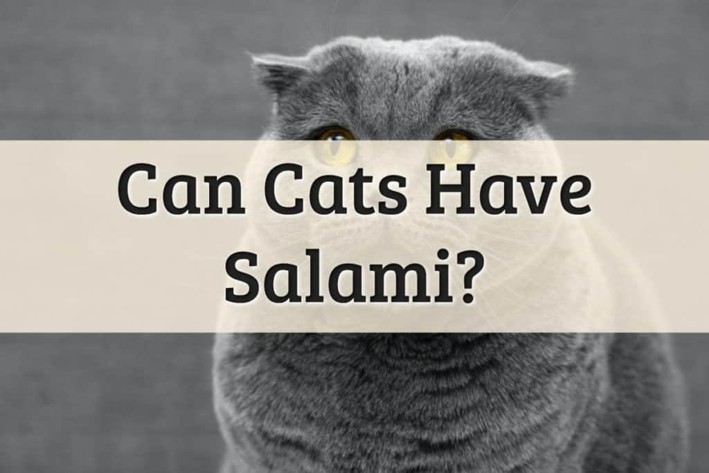 Can Cats Have Salami Feature Image
